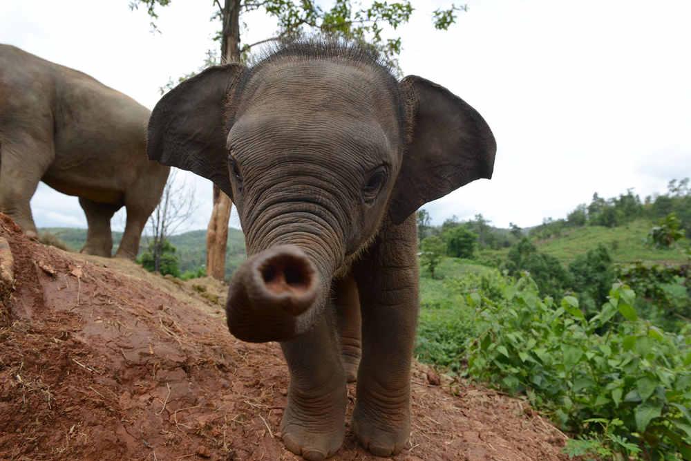 Elefanten Tour